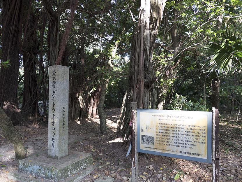 Minamidaito9